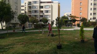 Ağaçlandırma çalışmalarımız devam ediyor
